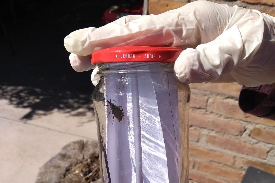 Río Negro se mantiene libre de transmisión de Chagas