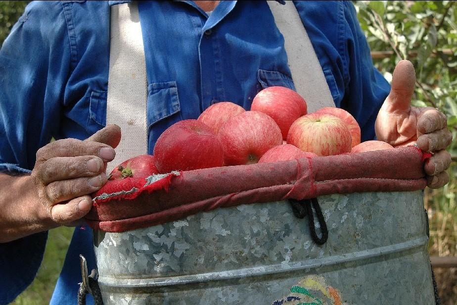 El Gobernador Weretilneck se reunió con productores frutícolas