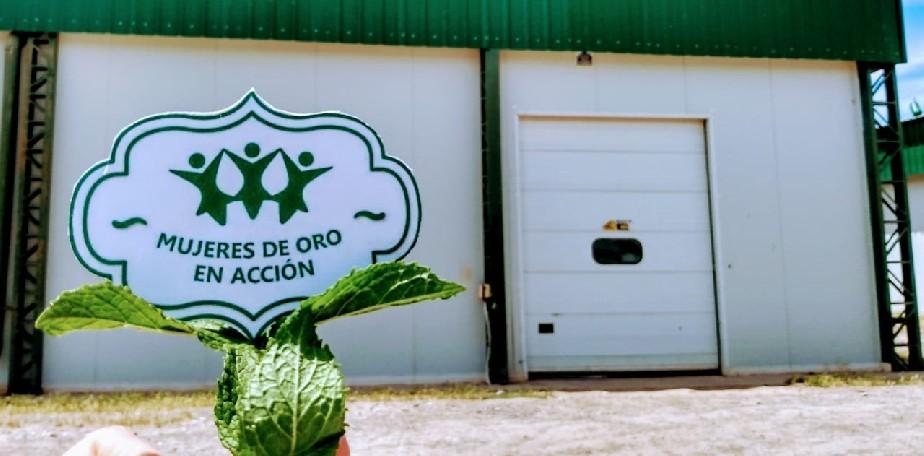 Imagen-La Cooperativa Mujeres de Oro en Acción crece y se fortalece, con el acompañamiento de la Provincia.